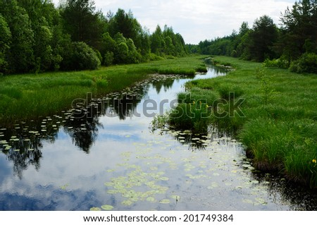 River with waterlilies, flows through the meadow between the bushes
