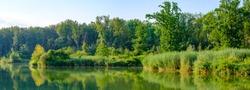 riverside forest nearby the danube river in upper austria