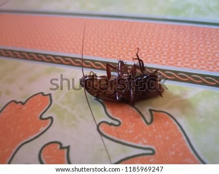 Roach dead on a tile floor in the house.