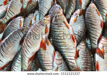 Roach fish in farme's market in Sapanca, Turkey.