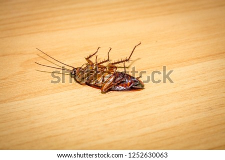 Roaches lie dead on a brown wood table.