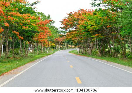 Road among colorful trees on the way to mountain