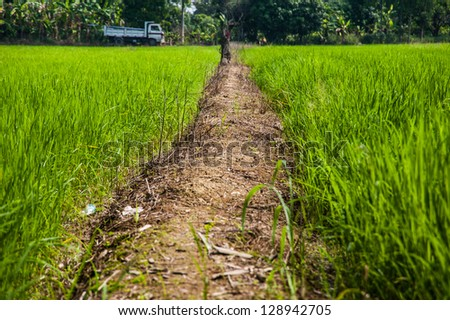 road and rice field