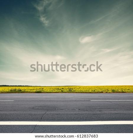 Road and sun flowers. Retro toned landscape