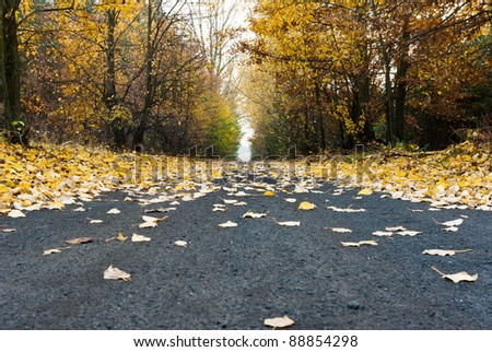 road, asphalt road under fluffy leafs, fall scenic country road