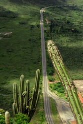 road between cactus in the moutain.