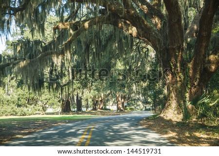 Road curving past massive old oak tree with sun dappled spanish moss