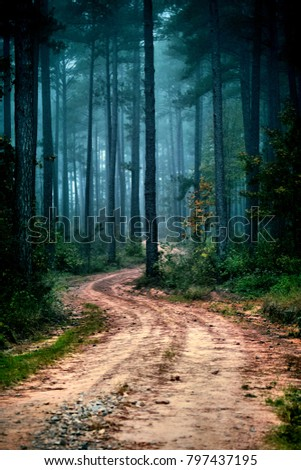 Road, dirt road, path #797437195