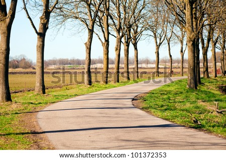 road for bicycles between the trees at sunny day