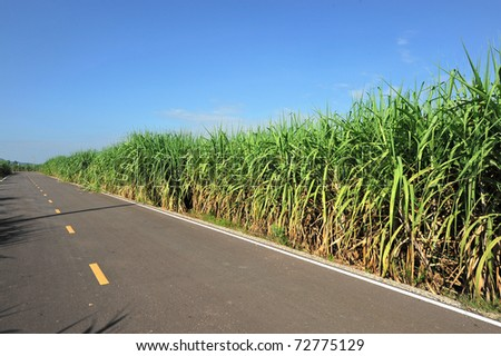 Road for the Sugar Cane Field, thailand
