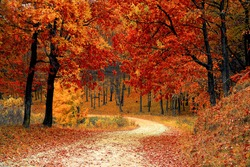 Road Forest Fall Path Trail Trees Woods Foliage