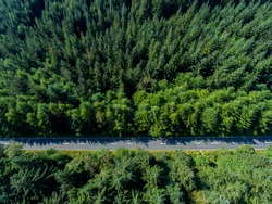 Road going through forest landscape, view from the above