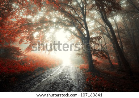 road in a forest in autumn