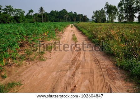 Road in a manioc farm