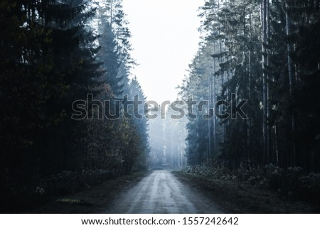 Road in a mysterious dark forest with fog and rays of sunlight. Depressive mood. Wild world.