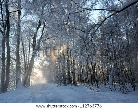 Road in a wonderful winter forest - stock photo