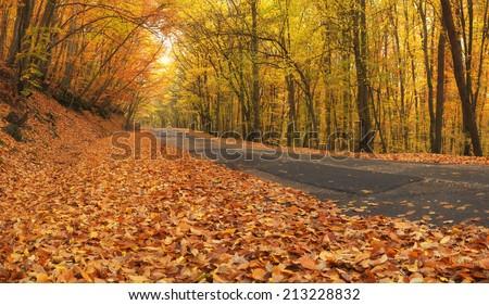 Road in autumn forest. Autumn landscape