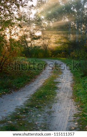 Road in autumn wood with bright sun rays shining through branches of trees, beautiful landscape