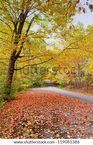 Road in  beautiful autumn forest