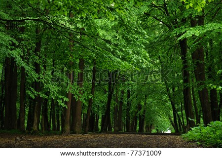Road in beech forest in the evening
