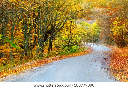 Road in bright autumn forest. Natural composition