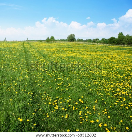 Road in dandelion field.