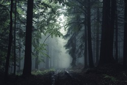 Road in fog forest. Taken in Beskidy mountain, Poland.