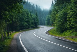 Road in foggy forest in rainy day in spring. Beautiful mountain curved roadway, trees with green foliage in fog and overcast sky. Landscape with empty asphalt road through woodland in summer. Travel