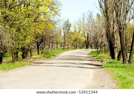 Road in forest. Day time time of day, green plantings