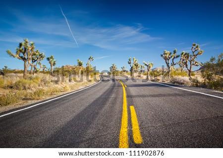 Road in Joshua Tree National Park, Mojave Desert, California