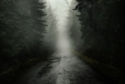 Road in misty forest.