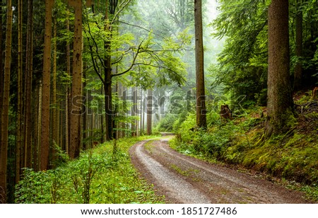 Road in misty forest view. Mist forest road. Misty forest road. Trail in misty forest
