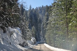Road in snow forest in Sequoia National Park, California, USA
