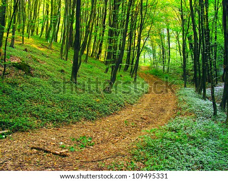 Road in summer forest.