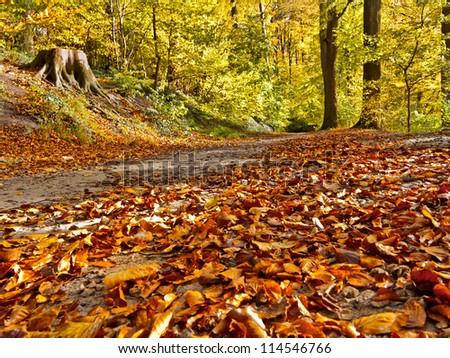 Road in the autumn park. Autumn Landscape. Park in Autumn. Forest  in Autumn. Dry leaves in the foreground.