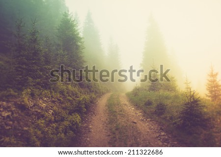 road in the fog of the mountain ...