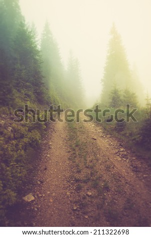 Road in the fog of the mountain forest.Filtered image:cross processed vintage effect.