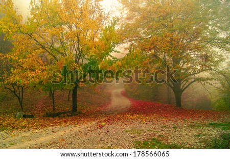 Road in the foggy autumnal forest