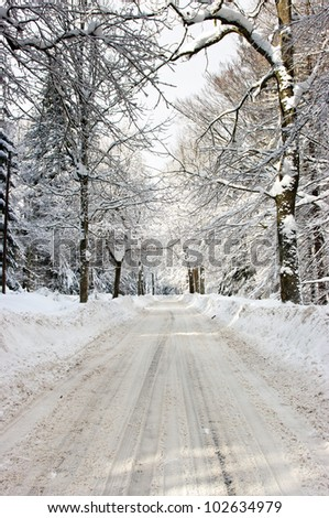 Road in the forest during the winter