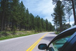 Road in the forest through the window, travel concept with copy space for text. Custer State park as part of Black Hills in United States South Dakota, country road with hills and green trees.