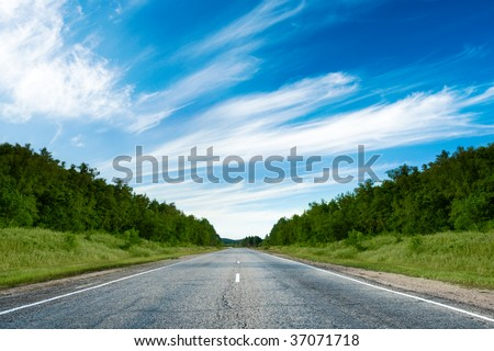 road in the forest under blue skies