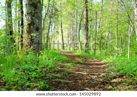 road in the morning forest