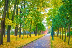 Road in the park with green and yellow trees and fallen leaves
