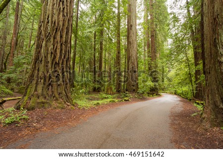 Road in the Redwood Forest at Armstrong Redwoods State Park.