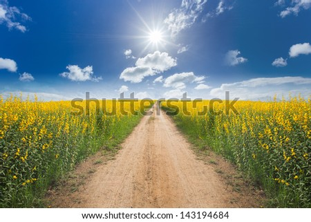 Road in the yellow flower fields with sun and blue sky