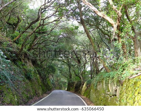 Road in trees, Sintra, Portugal #635066450