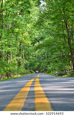 Road into forest in Washington DC