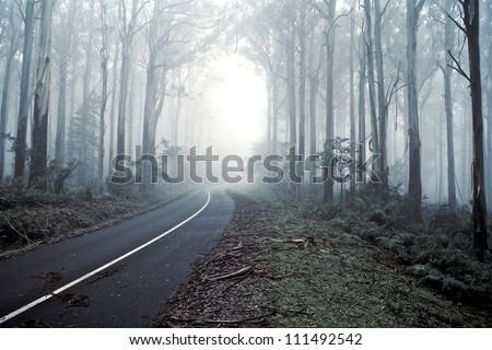 Road Leading Into the misty forrest