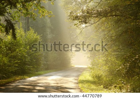 Road leading through the enchanting forest in the light of morning sun.