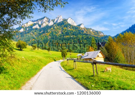 Road leading to Trzy Korony (Three Crowns) peak in Pieniny National Park, Poland. Scenic view on a warm sunny autumn day with a pasture, hut and a grazing goat. Zdjęcia stock ©